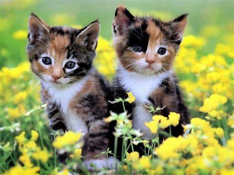 wallpaper cats baby baby kitten wallpapers wallpaper cave