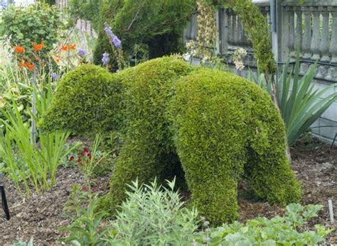 topiary design 15 amazing ideas of topiary for your garden