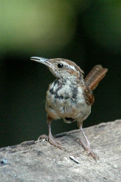 bird behavior birds in the yard