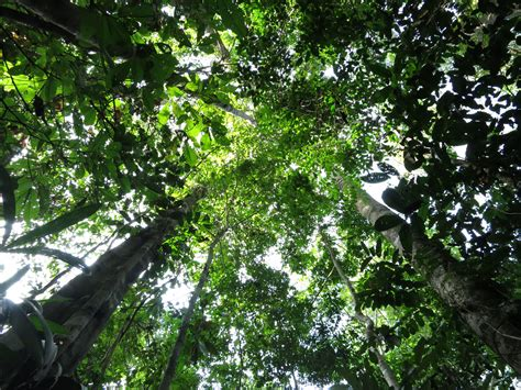 Ashampoo Home Designer Pro Youtube by What Is A Forest Canopy 28 Images Rainforest Canopy