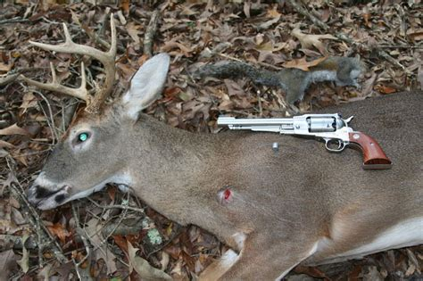 how to hunt squirrels in your backyard backyard for deer squirrels and geese dec 5