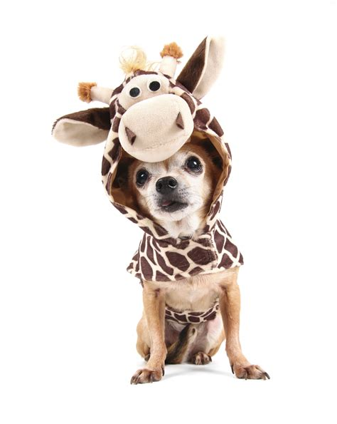 costumes for top 5 adorable pet costumes this year s