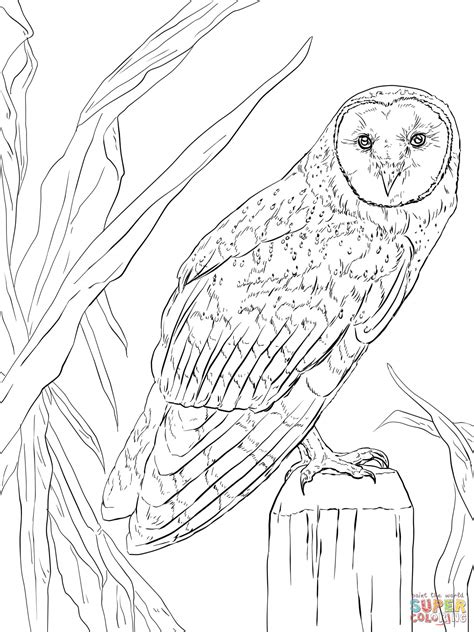coloring pages nocturnal animals pictures of nocturnal animals coloring home