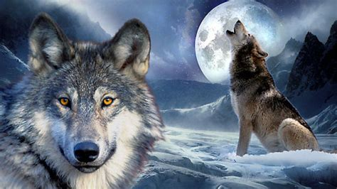 wallpaper wolf wolf howling at the moon wallpapers wallpaper cave