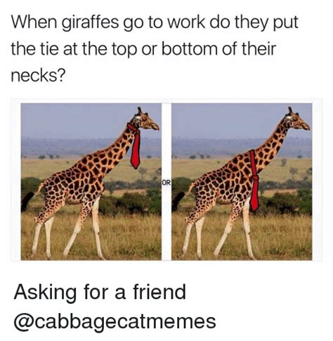Giraffe Hat Meme - giraffe hat meme when giraffes go to work do they put