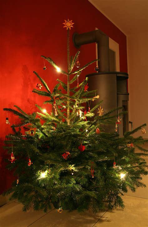 weihnachtsb 228 ume bleiben mit wasser l 228 nger frisch
