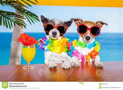 cocktail dogs cocktail dogs stock photo image 54849117
