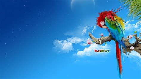 Colourful Parrot wallpaper 344697