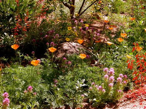 fall planting wildflowers and more water use it wisely