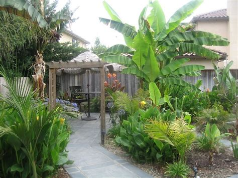 Landscaping Ideas Zone 8a 68 Best Images About For My Tropical Looking Garden In