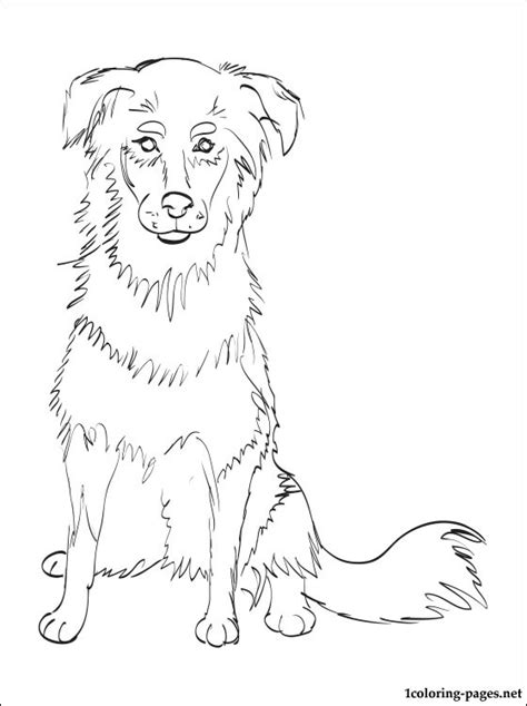 english shepherd coloring page coloring pages