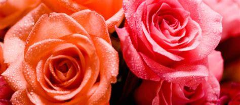 imagenes romanticas flores image gallery imagenes de flores romanticas