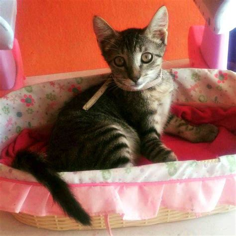 Kaos Cats And Cookies featured kitties for september 2015