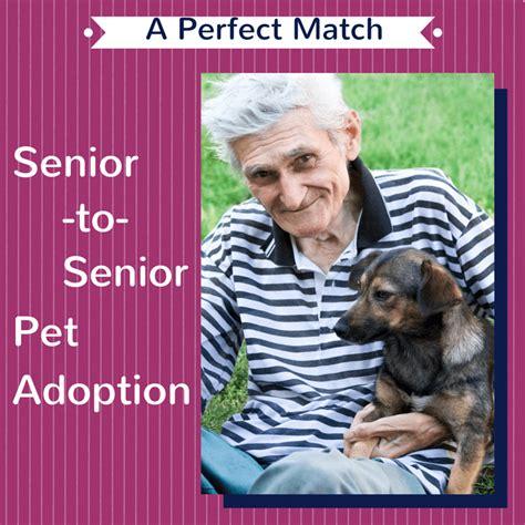 senior dogs 4 seniors pet friendly senior living archives page 4 of 6 senioradvisor