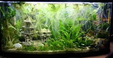 Aquarium Ohne Pflanzen Einrichten 6848 by Blaue Tiger Garnelen