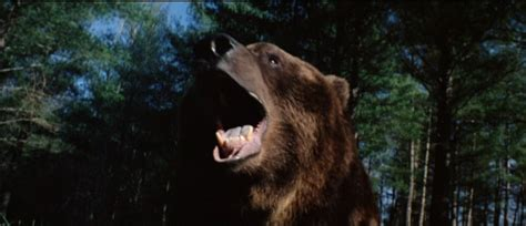 watch grizzly 1976 movie grizzly bear movies pictures to pin on pinterest pinsdaddy