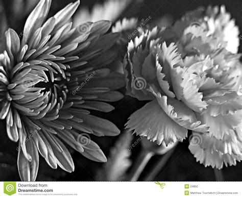 imagine fiori fiori in bianco e nero di arti fotografia stock immagine