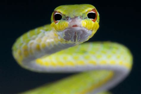 how to catch a snake in your backyard how to catch a snake in your backyard how to catch a snake
