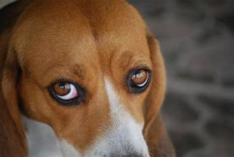 eye contact with dogs understanding to eye contact