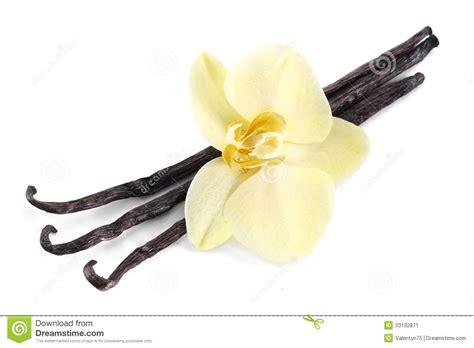 Vanela White vanilla sticks with a flower stock image image of