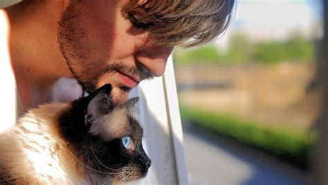 most loving breeds 24 most loving and affectionate cat breeds that will melt your gallery cattime