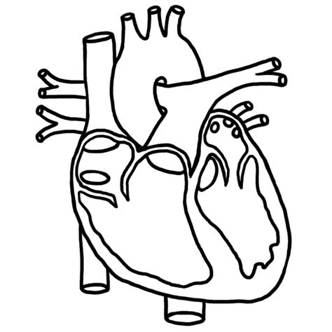 human heart coloring page az coloring pages