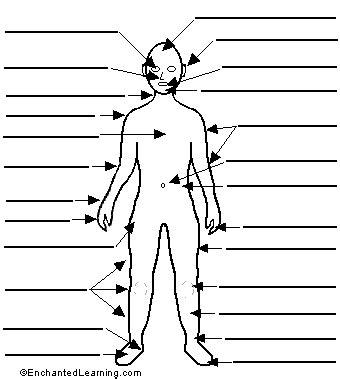 printable label body parts label human body printout enchantedlearning com