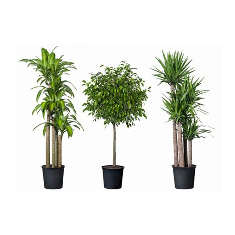 potted plants tropisk potted plant ikea