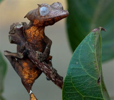 patterns and nature asu animals in camouflage ask a biologist