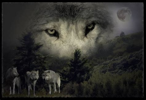 minicuentos de lobos y lobos imagens e fotos para facebook whatsapp p 225 gina 7