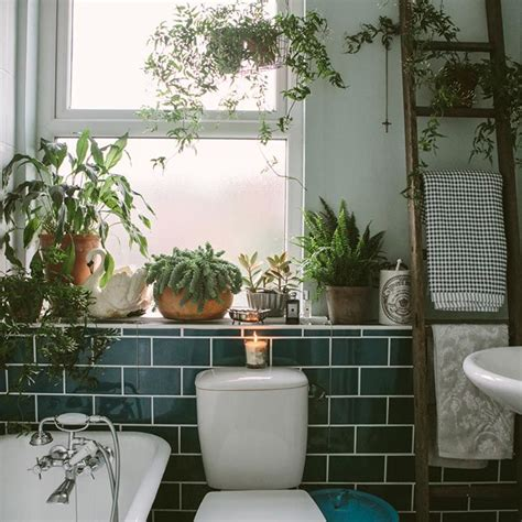 plants for bathroom with no windows best 25 bathroom plants ideas on pinterest best