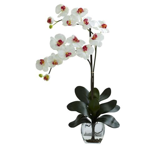 nearly phalaenopsis orchid with vase