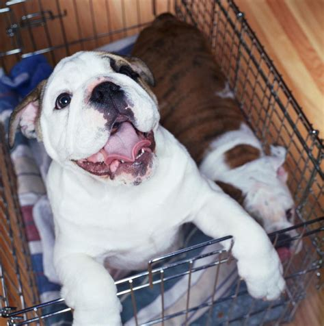 how to crate how to crate your or puppy
