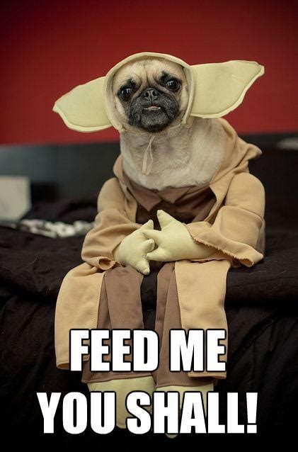pug yoda costume for sale cool costume or is it a costume puppies cool costumes