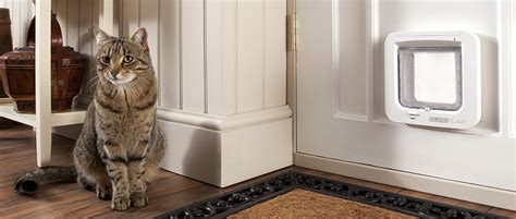 How To Install Cat Door by Where Is The Best Place To Install A Cat Door Cat Care