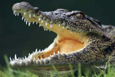 Shedding Crocodile Tears by President Obama Union Bosses Shed Crocodile Tears