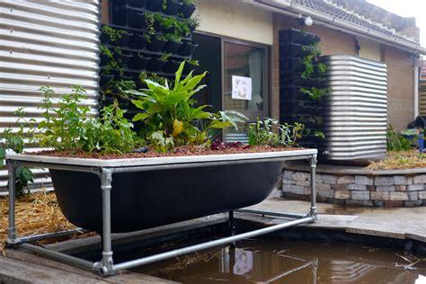 a diy bathtub aquaponics system milkwood