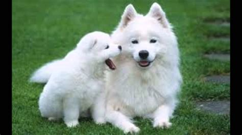most beautiful dogs most beautiful pictures of dogs www imgkid the image kid has it