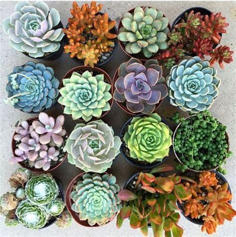 546 best succulent care tips images on pinterest