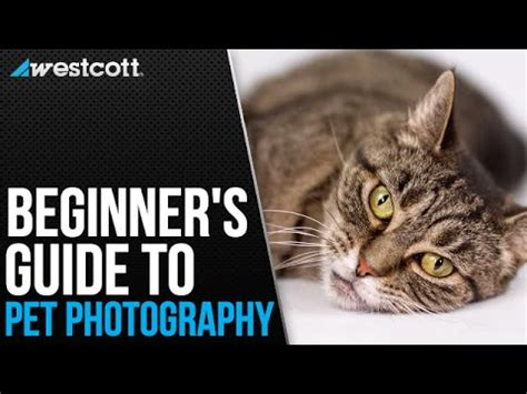 pet and photography for everybody secrets from a pro books pet photography tips and techniques