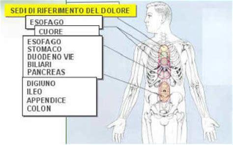organi interni corpo umano lato destro capire il dolore addominale