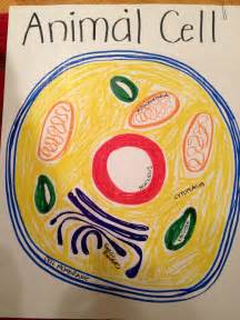 animal cell model diagram project parts structure labeled coloring and plant cell organelles
