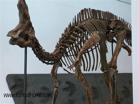 Who Find Dinosaur Bones Dinosaur Bones Images Search