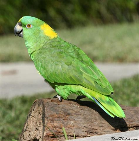 amazon parrot post 2 parrot s price in india