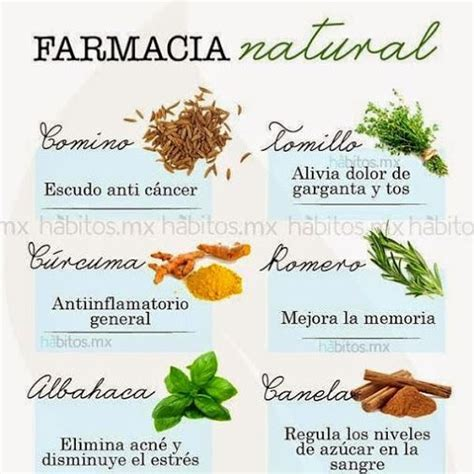 plantas medicinales 17 best images about medicinales on medicinal plants tes and health