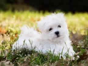 Best Hypoallergenic Comforter Ranked The 11 Best Dog Breeds Business Insider