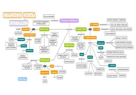 tejidos animales y vegetales mapa conceptual de tejidos animales y vegetales by julio