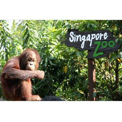 Safari Singapore E Ticket Dewasa 1 Orang jual travel point tour bandung singapore zoo e ticket anak harga kualitas