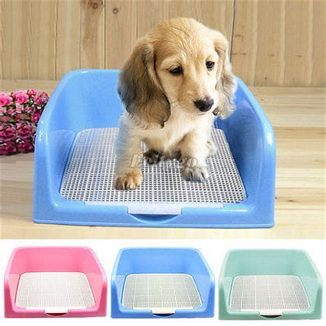 how do you potty a puppy when do you potty a child potty pads for dogs philippines potty