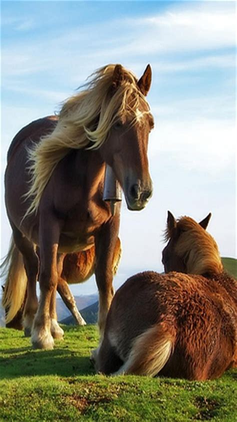 wallpaper for iphone horse horse parenting animal iphone wallpapers iphone 5 s 4 s